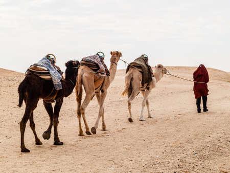 Douz, Tunisie, Afrique, caravane de chameaux dans le désert du Sahara au coucher du soleil s'en va vers l'horizon