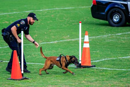 Cocoa, Florida / USA - October 12, 2019: A Cocoa Beach Police Department K9 team competes in the Space Coast Police K9 Competition. Archivio Fotografico - 132890757