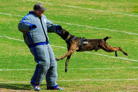 Cocoa, Florida / USA - October 12, 2019: A Law Enforcement K9 attacks a trainer in a padded bite suit during the Space Coast Police K9 Competition. Archivio Fotografico - 132890758