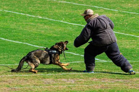 Cocoa, Florida / USA - October 12, 2019: A Law Enforcement K9 attacks a trainer in a padded bite suit during the Space Coast Police K9 Competition. Archivio Fotografico - 132890760