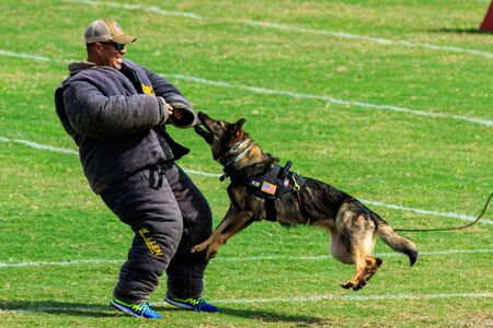 Cocoa, Florida / USA - October 12, 2019: A Law Enforcement K9 attacks a trainer in a padded bite suit during the Space Coast Police K9 Competition. Archivio Fotografico - 132890761