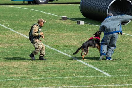 October 12, 2019: Cocoa, Florida / USA - A Brevard County Sheriff's Office K9 Deputy and his four-legged partner demonstrate an apprehension from the air during the Space Coast Police K9 Competition. Archivio Fotografico - 132890766