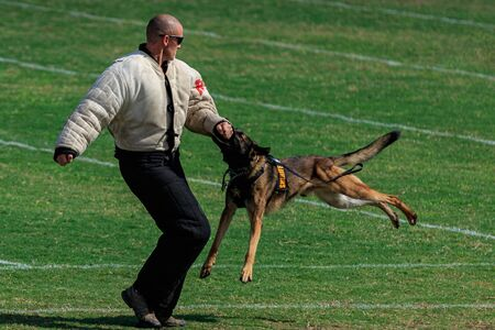 Cocoa, Florida / USA - October 12, 2019: A Law Enforcement K9 attacks a trainer in a padded bite suit during the Space Coast Police K9 Competition. Archivio Fotografico - 132890775