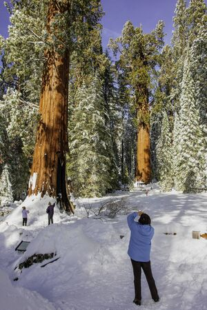 Tourists greeted by a winter wonderland following a heavy storm in Sequoia National Park within the Sierra Nevada Mountains in California, USA.