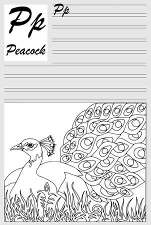 Peacock, english alphabet, coloring outline, write and paint. Set of cards, illustration and text.