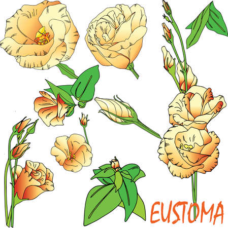 Set of floral branch. Flower eustoma, green leaves. Floral poster,vector arrangements for greeting cards. Text, gradient.