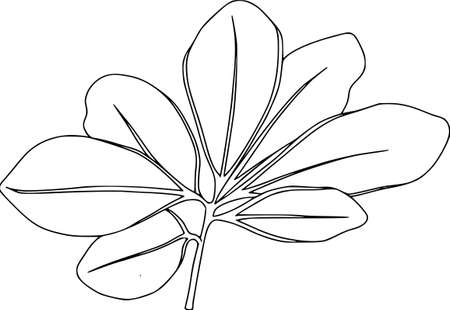 Vector botanical elements, doodle. Flowers, herbs, leaves. Collection garden foliage, illustration isolated on white background. Leaves and grass blades, elements for design, coloring outline