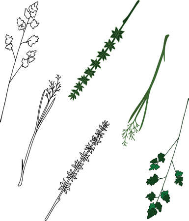 Vector botanical elements, doodle. Flowers, herbs, leaves. Collection garden foliage, illustration isolated on white background. Contour grass blades, colored and black Illustration