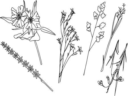 Vector botanical elements, doodle. Flowers, herbs, leaves. Collection garden foliage, illustration isolated on white background. Contour grass blades