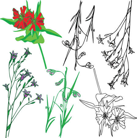 Vector botanical elements, doodle. Flowers, herbs, leaves. Collection garden foliage, illustration isolated on white background. Contour grass blades, colored
