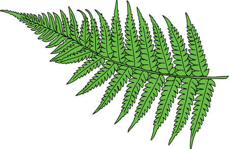 Vector botanical elements, doodle. Flowers, herbs, leaves. Collection garden foliage, illustration isolated on white background. Leaves and grass blades  イラスト・ベクター素材