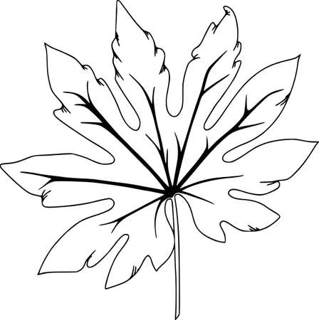 Vector botanical elements, doodle. Flowers, herbs, leaves. Collection garden foliage, illustration isolated on white background. Leaves and grass blades, botanical elements, coloring outline.