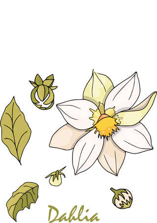 Set of floral branches with leaves. Flower dahlia, green leaves. Floral poster,vector arrangements for greeting cards. Vector set, colored