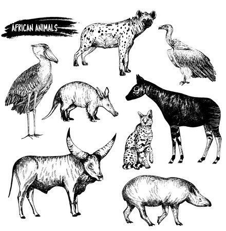Hand drawn sketch set of animals - shoebill, aardvark, hyena, vulture, okapi, serval, tapir and Watusi cattle. Vector illustration isolated on white background.
