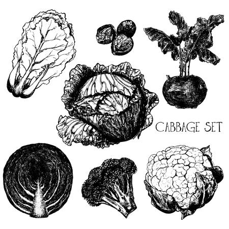 Hand drawn sketch set of different kinds of cabbage - chinese cabbage, brussels, kohlrabi, headed cabbage, red cabbage, broccoli, cauliflower. Vector illustration isolated on white background. Ilustracja
