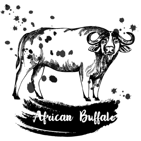 Hand drawn sketch style African buffalo isolated on white background.