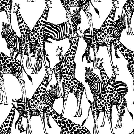 Seamless vector pattern of hand drawn sketch style giraffes and zebras.