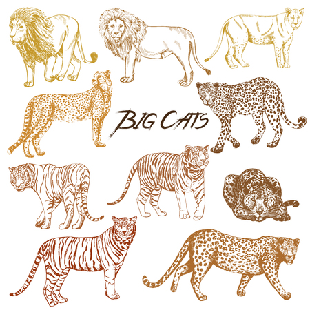 Set of hand drawn sketch style big cats isolated on white background. Vettoriali