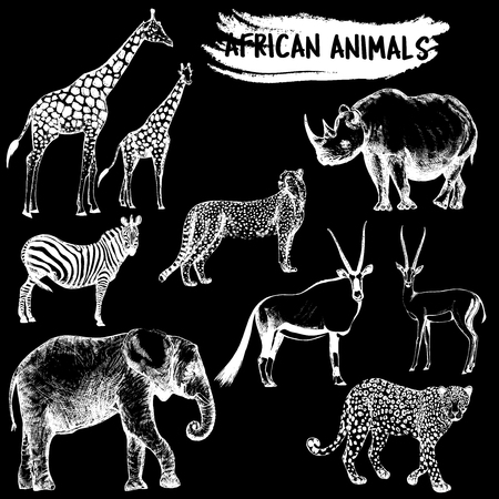 Hand drawn sketch style set of African animals - giraffe, zebra, elephant, cheetah, oryx, leopard, gazelle and rhino. Vector illustration isolated on black background.