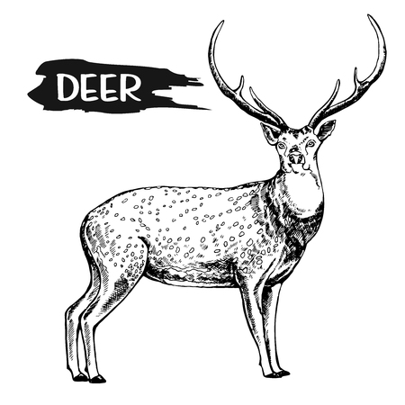 Hand drawn sketch style deer. Vector illustration isolated on white background. Imagens - 93313180