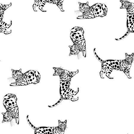 Teste padrão sem emenda de gatos de bengal tirados mão do estilo do esboço. Ilustração vetorial, isolada no fundo branco.