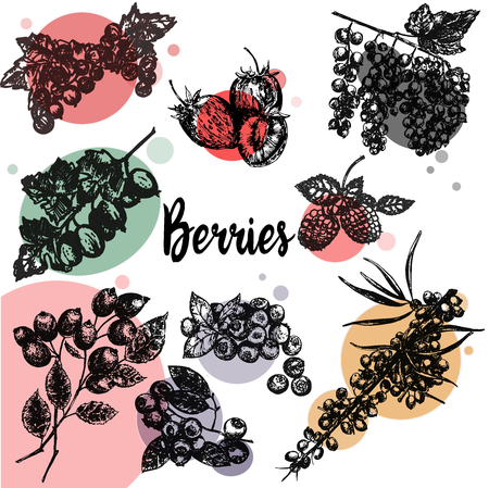 Hand drawn sketch style set of different kinds of berries. Vector illustration isolated on white background.  イラスト・ベクター素材
