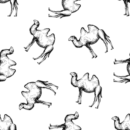 Seamless pattern of hand drawn sketch style camel. Vector illustration isolated on white background.
