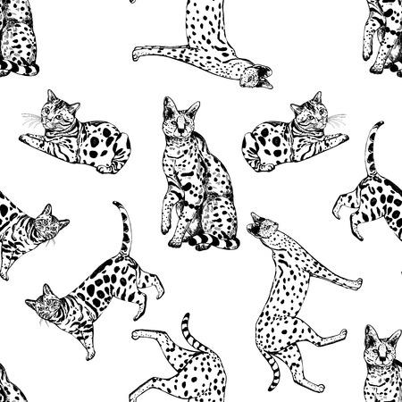 Teste padrão sem emenda de gatos e de servals tirados mão de bengal do estilo do esboço. Ilustração vetorial, isolada no fundo branco.