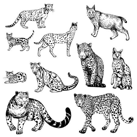 Leopardo, gatto del Bengala, leopardo, serval, lince e snow leopard nebulosi disegnati a mano stile schizzo. Illustrazione vettoriale isolato su sfondo bianco