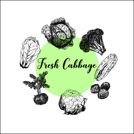 Hand drawn sketch set of different kinds of cabbage. Isolated vector illustration. Illustration