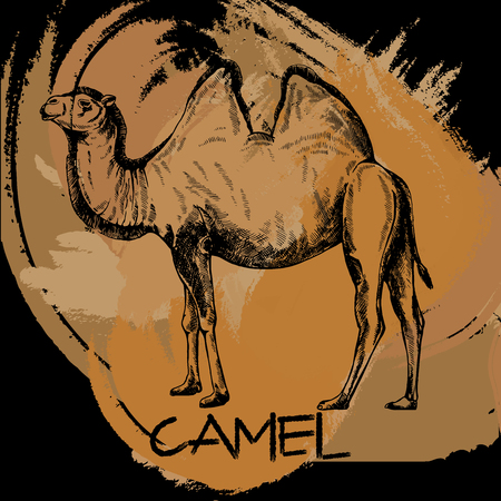 Hand drawn sketch style camel. Isolated vector illustration.