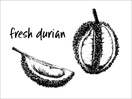 Hand drawn sketch set of durian fruits. Vector illustration isolated on white background.