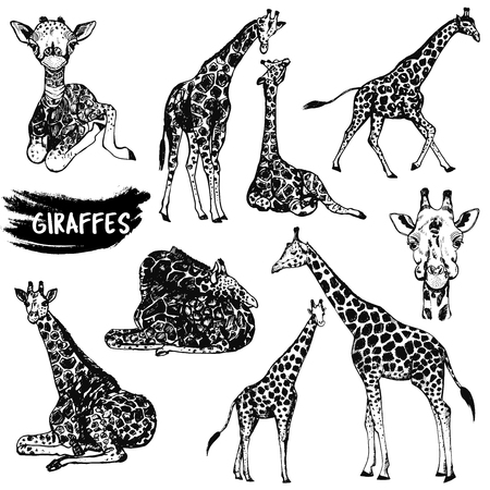 Sketch set of hand drawn giraffes. Vector illustration isolated on white background. Ilustração