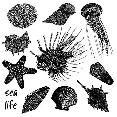 Hand drawn sketch set of sea creatures - coral, seashells, jellyfish, lionfish and starfish. Vector illustration isolated on white background. Illustration
