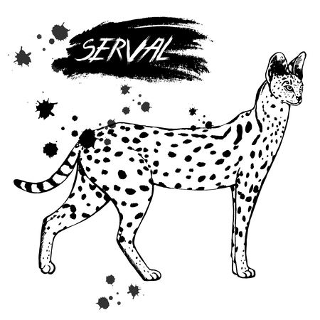Hand drawn sketch style serval. Vector illustration isolated on white background. Stock Vector - 93786901