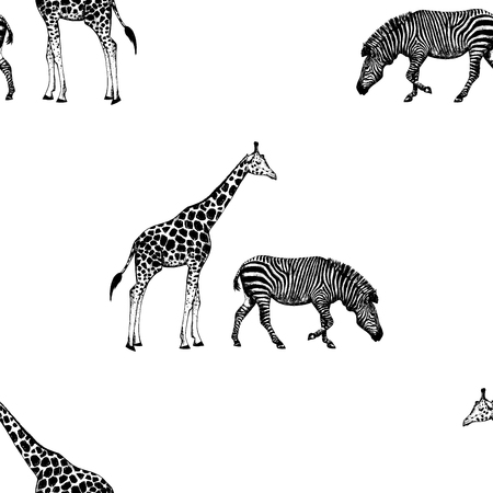 Seamless pattern of hand drawn sketch style giraffe and zebra. Vector illustration isolated on white background.  イラスト・ベクター素材