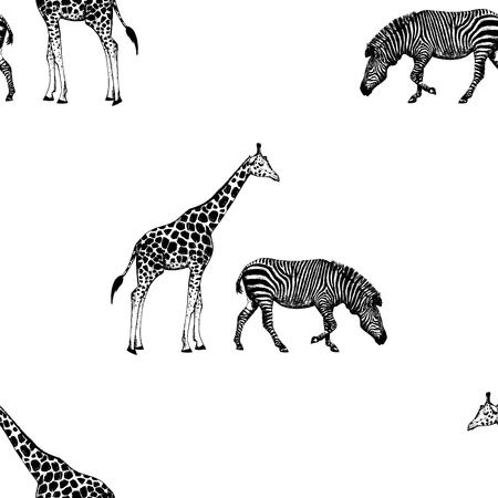 Seamless pattern of hand drawn sketch style giraffe and zebra. Vector illustration isolated on white background. Ilustração