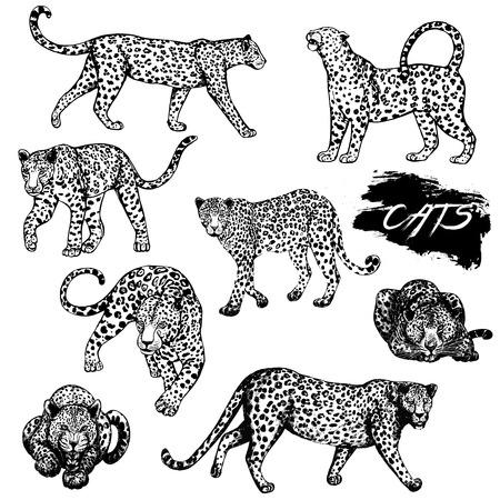 Conjunto de leopardos de estilo boceto dibujado a mano. Ilustración del vector aislada en el fondo blanco.