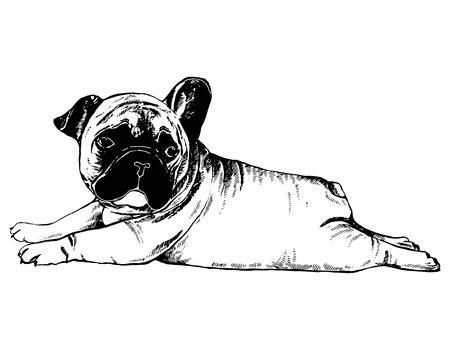 손으로 그린 스케치 스타일 프랑스 불독 강아지입니다. 벡터 일러스트 레이 션 흰색 배경에 고립. 일러스트