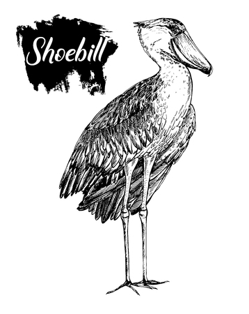 Hand drawn sketch style shoebill. Vector illustration isolated on white background.