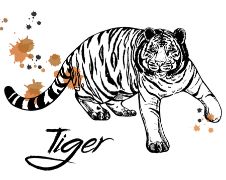 Hand drawn sketch style tiger. Vector illustration isolated on white background. Çizim