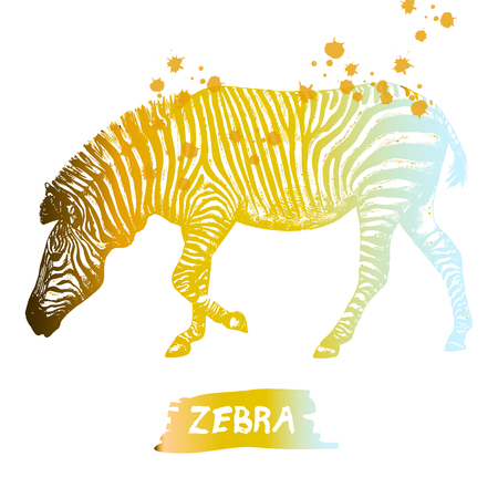 Hand drawn sketch of zebra. Vector illustration isolated on white background.
