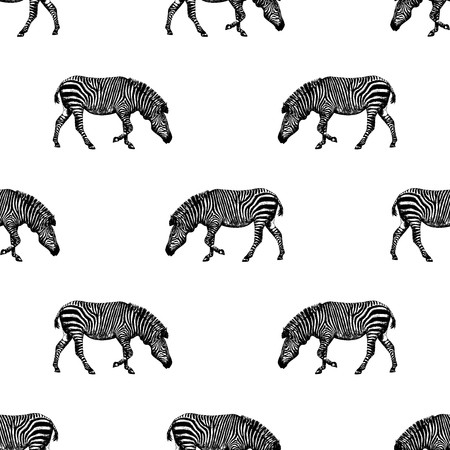 Seamless pattern of hand drawn sketch style zebra. Vector illustration isolated on white background.