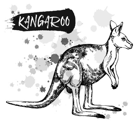 Hand drawn sketch style kangaroo. Vector illustration isolated on white background.