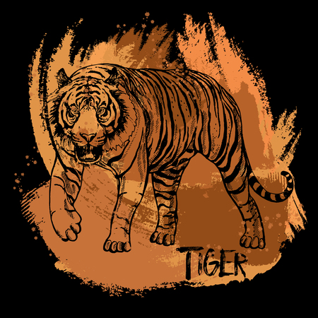 Hand drawn sketch style tiger. Isolated vector illustration. Vectores
