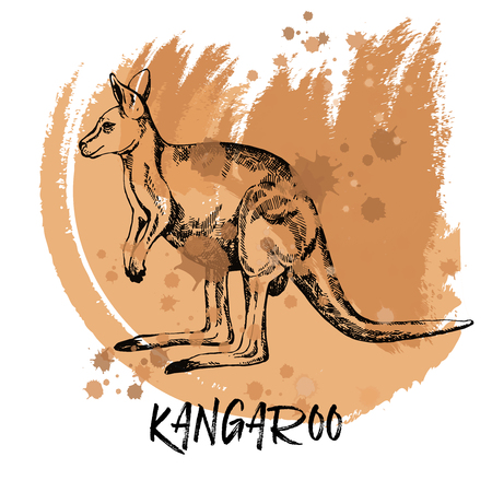 Hand drawn sketch style kangaroo. Vector illustration isolated on white background. Imagens - 95465755