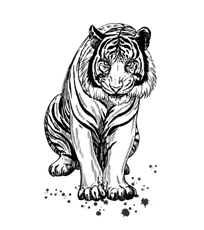 Hand drawn sketch style tiger. Vector illustration isolated on white background. Vetores