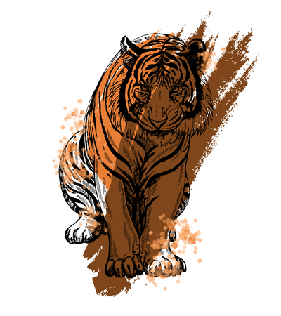 Hand drawn sketch style tiger. Vector illustration isolated on white background. Illustration