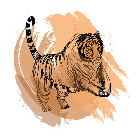 Hand drawn sketch style tiger. Vector illustration isolated on white background. Vectores