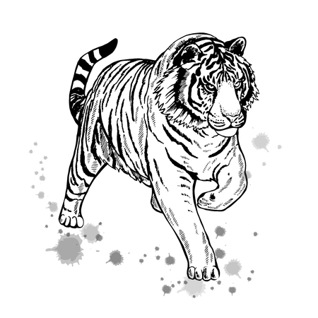 Hand drawn sketch of a tiger.